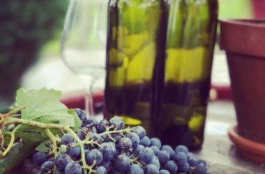 wine tour portoroz koper