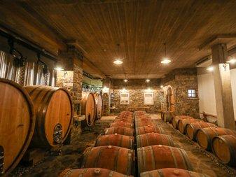 Wine Tasting Tour Slovenian Istria thumb